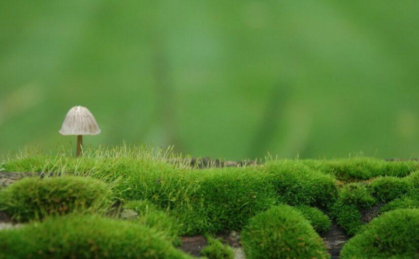 Определение грибов
