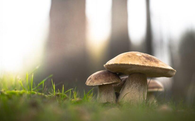 Разведение грибов и их питательная ценность