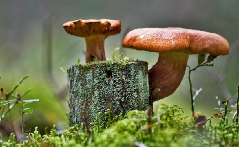 Как размножаются грибы