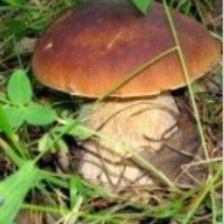 «Всё про грибы»