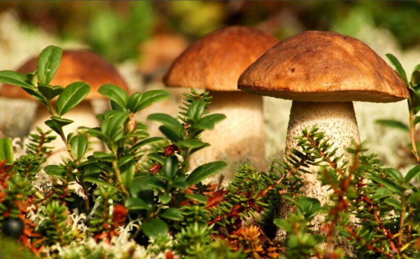Карта сайта «Всё про грибы»